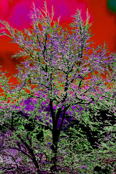 Img 9399 Max Peter Lite 2 Art | Oz Fine Art Studio