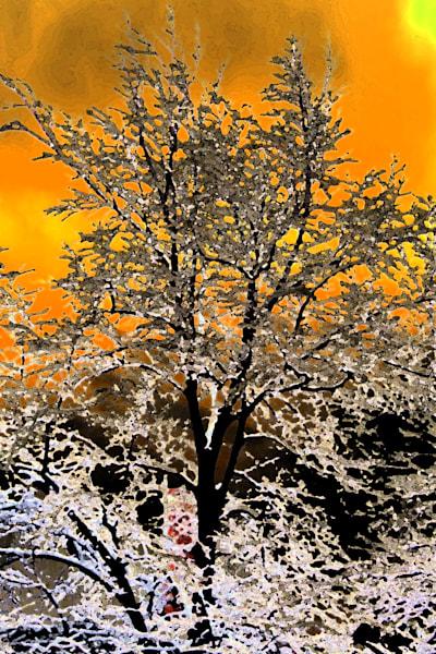 Img 9399 Solar Pkf Art | Oz Fine Art Studio