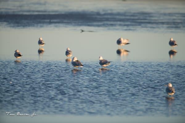 Gulls in the morning sun
