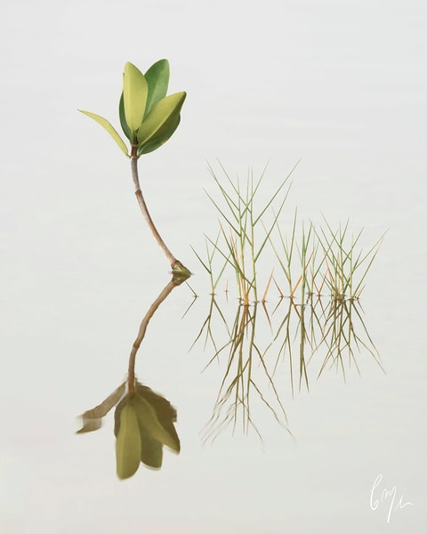 Constance Mier Photography - Simplicity in Nature