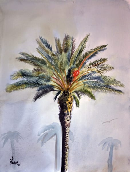 Lakeland Palm Tree