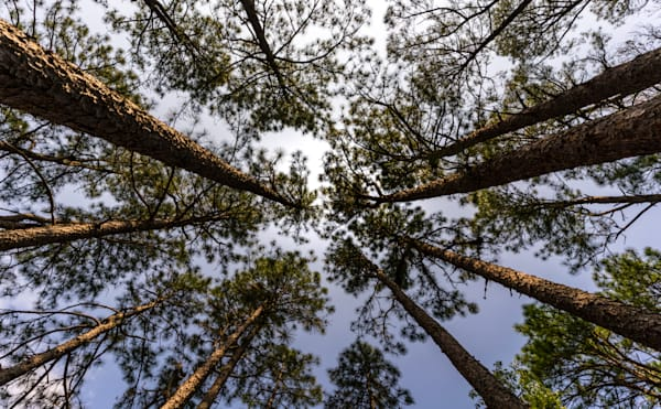 South Carolina forest Photograph for Sale as Fine Art