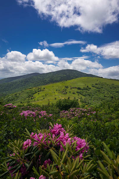 Summer Roan Mountain Hike Photograph for Sale as Fine Art