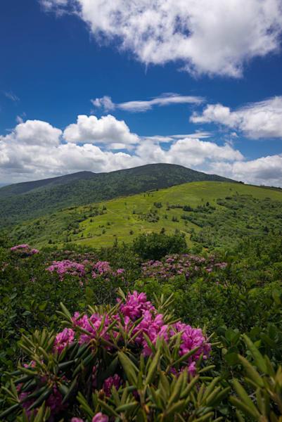 Summer Roan Mountain Hike Photograph for Sale as Fine Art