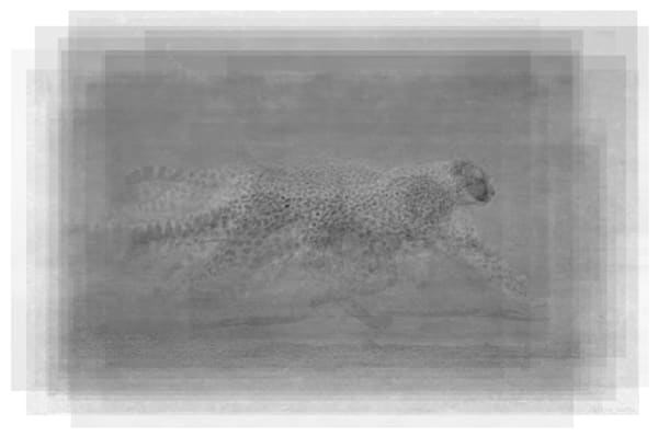 Overlay art – contemporary fine art prints of a running cheetah