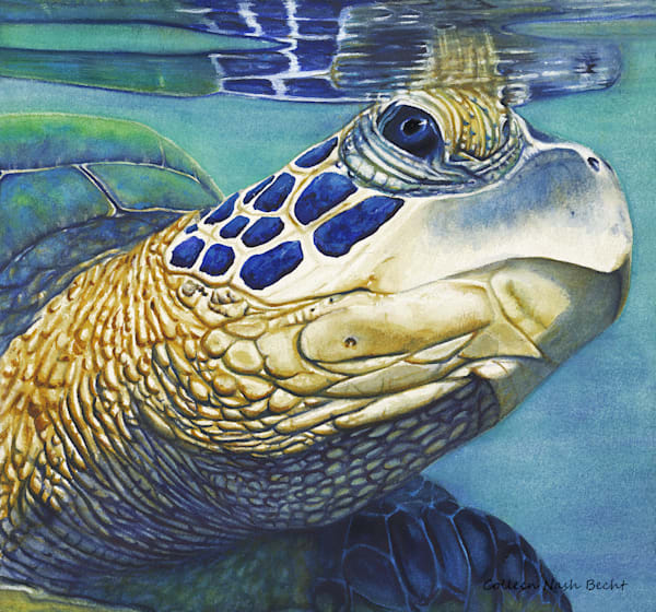 Beautiful Journey Sea Turtle