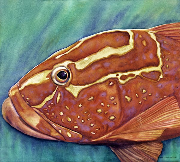 Grouper Art | ColleenNashBecht