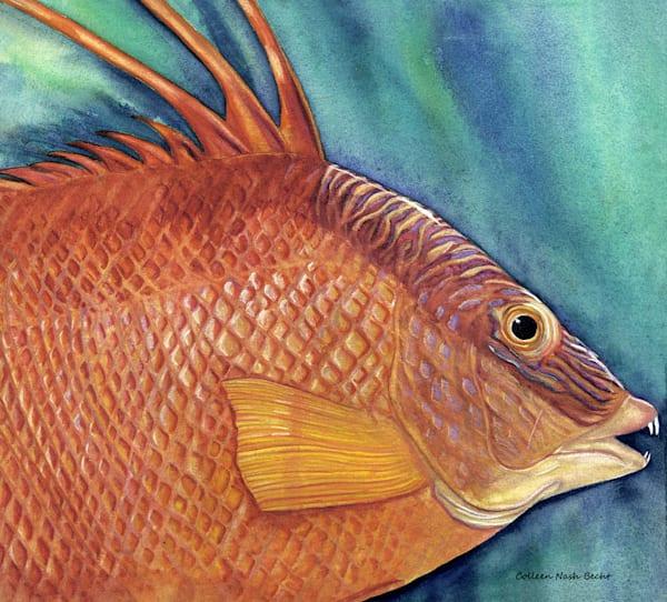 Hog Fish Art | ColleenNashBecht