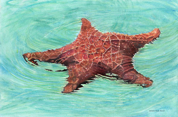 Sea Star / Star Fish Art | ColleenNashBecht