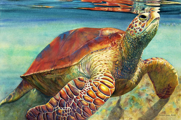 Surface To Air Sea Turtle Art | ColleenNashBecht