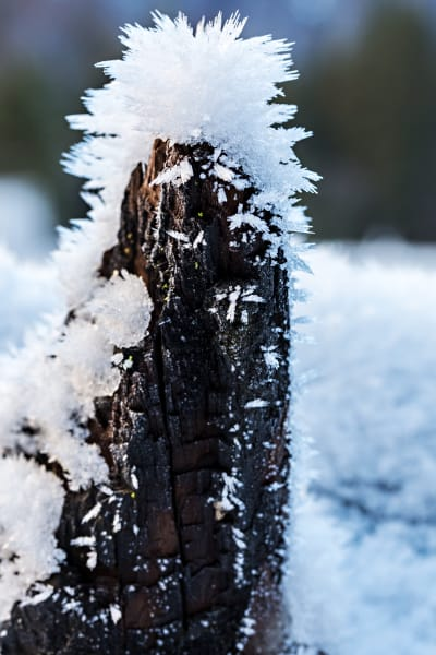 Icicles On Tree Log In Yosemite Photograph For Sale As Fine Art