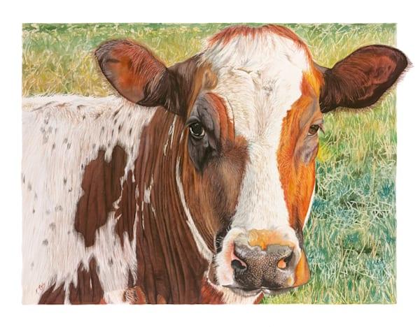 Alices Cow