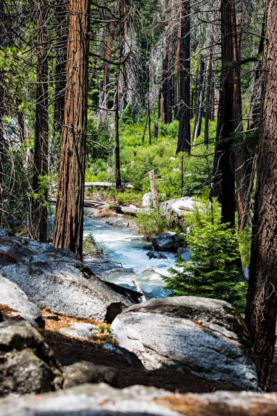 Forest View Around Kings River Photograph For Sale As Fine Art