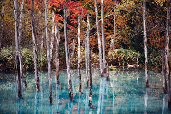 Blue lake and red trees photograph.