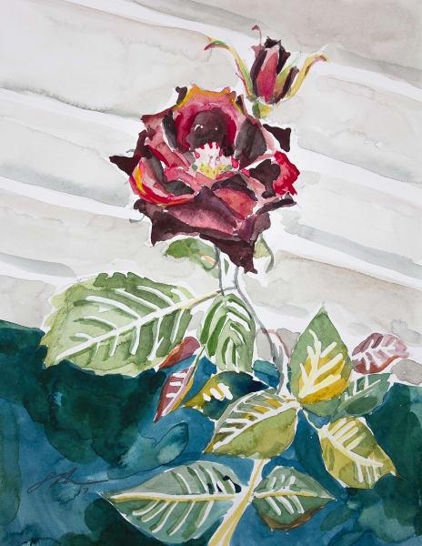 Rose on Wall Fine Art Print