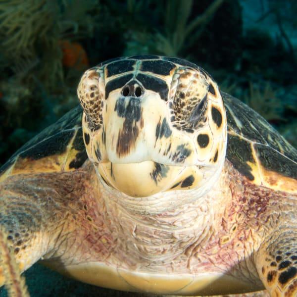 UW 378: Sea Turtle, Key Largo, Florida