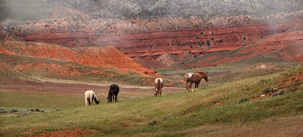 Horses in Sunlight Basin