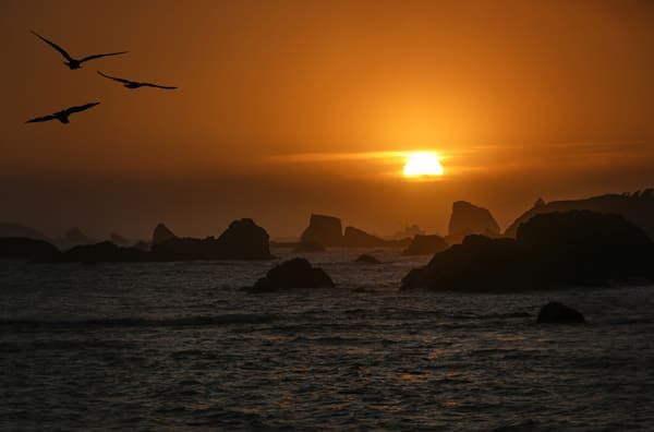 Ocean Sunset with Seagulls