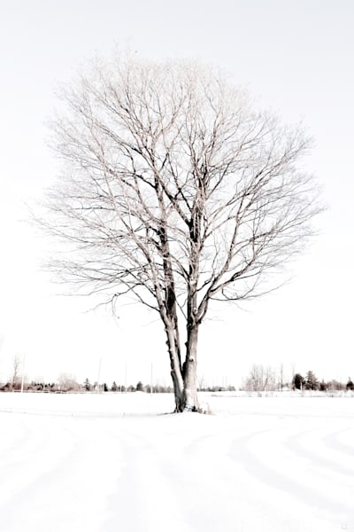 lone tree with white background fine art print for sale by Michael Toole.