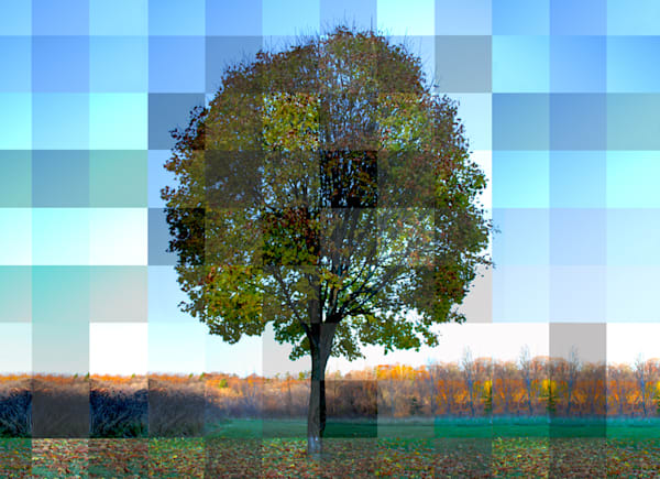 fall photograph with autumn colors art print for sale with multiple exposures mixed in a grid pattern by Michael Toole