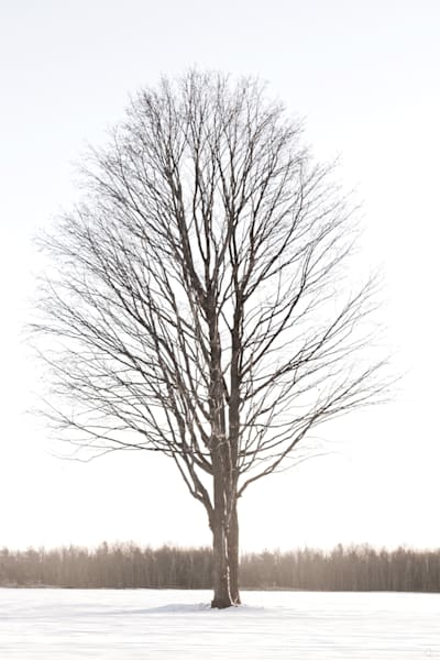 Cold, solitary, white tree winter modern art print for sale by Michael Toole.