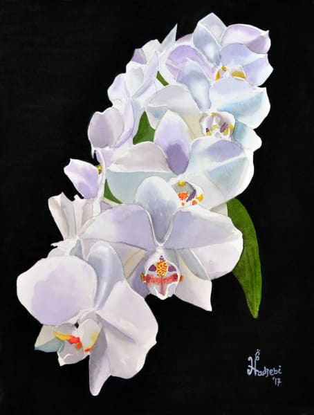 A watercolor painting of white orchids - prints available