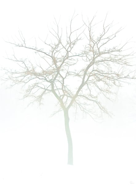 white, subtle, tree, winter, fineart photographs for sale by Michael Toole
