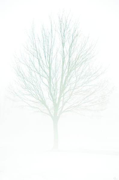 Tree photograph white background winter leafless art prints for sale by Michael Toole