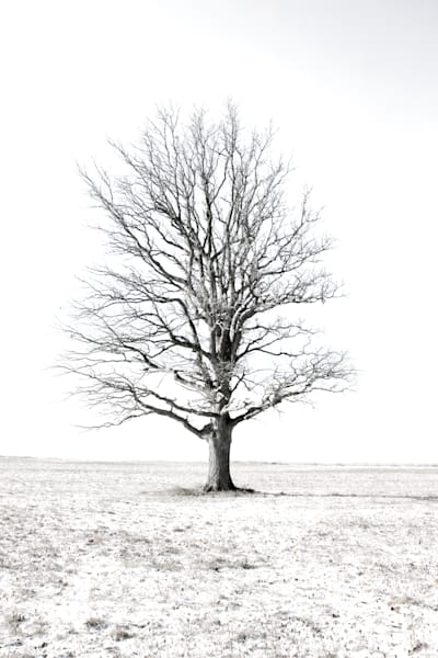 Photograph of a tree with a white winter backdrop available fine art print for sale by Michael Toole.
