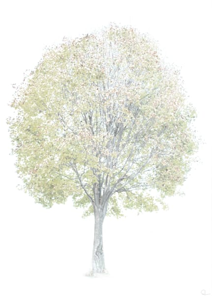 Tree, photograph, stark background, white, colorful leaves art prints for sale by Michael Toole