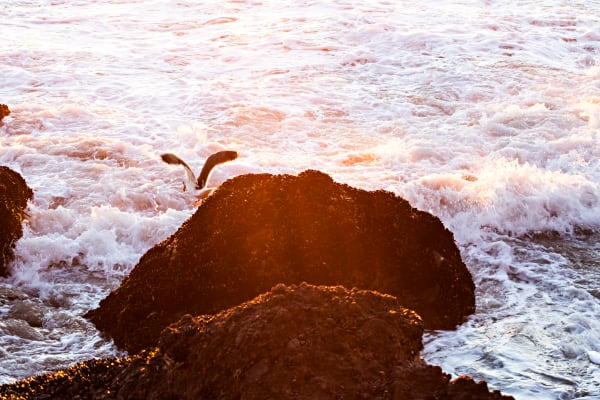 Seagull On Rocky Coast Photograph For Sale As Fine Art