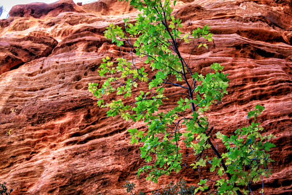 Green Tree with Red Rocks