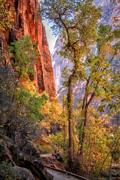 Zion in the Fall