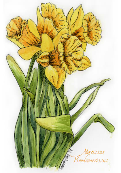 March   Daffodil Art | Geoffrey Butz Art & Design Inc