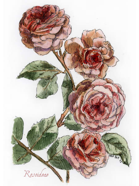 June   Rose Art | Geoffrey Butz Art & Design Inc