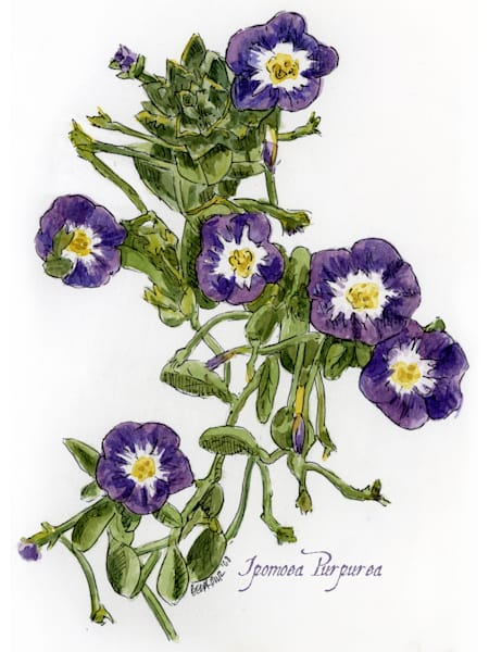 Sept   Morning Glory Art | Geoffrey Butz Art & Design Inc