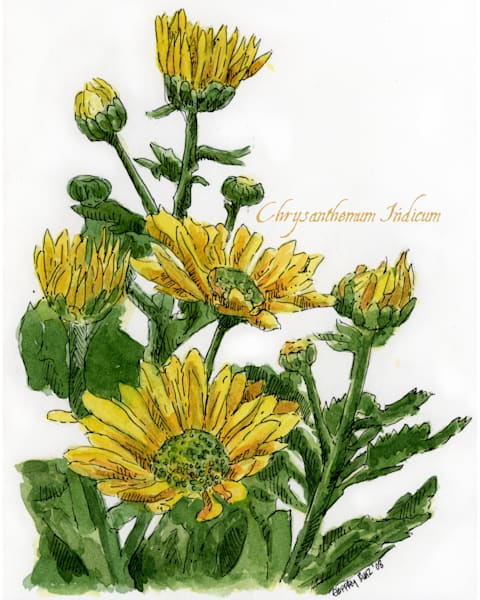 Nov   Chrysanthemum Art | Geoffrey Butz Art & Design Inc