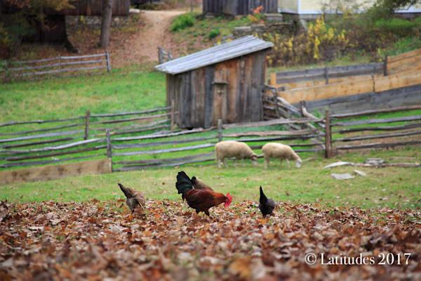 """Farm Life"""