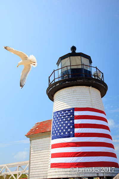 Light House Bird
