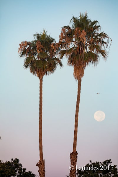347A5946 Two Palms and Moon