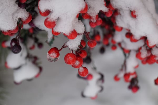 Nature winterscapes photographs for sale as fine art | Sage & Balm Photography