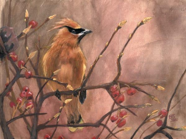Cedar Waxwing Art | Blissful Bonita Art Studio & Gallery