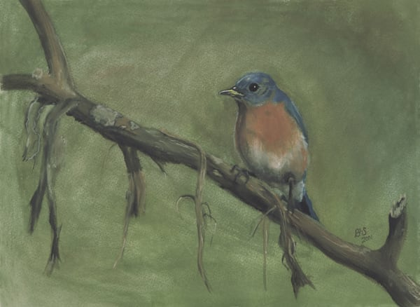 Bluebird Back Home Art | Blissful Bonita Art Studio & Gallery