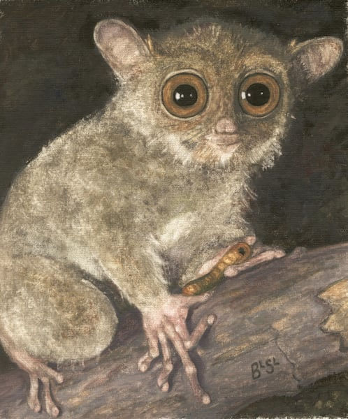 Bush Baby Bright Eyes Art | Blissful Bonita Art Studio & Gallery