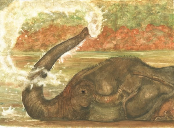 Elephant Bath Time Art | Blissful Bonita Art Studio & Gallery