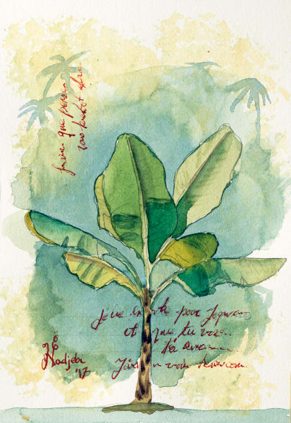 A watercolor painting of a Banana plant