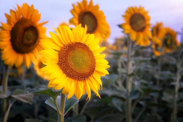 Good Morning Sunshine, Verona, Wisconsin, USA