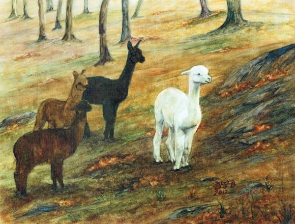 Alpacas Wheres the Dog