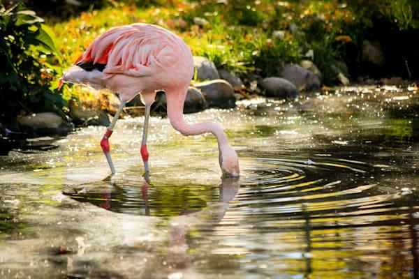 Flamingo Snack