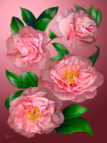 Pink Camellias, an art print by an original painting by Mary Ahern the artist.